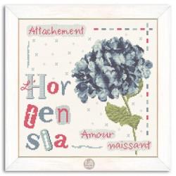 L'Hortensia