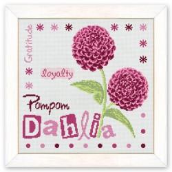 Pompom Dahlia