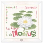 La fleur de Lotus